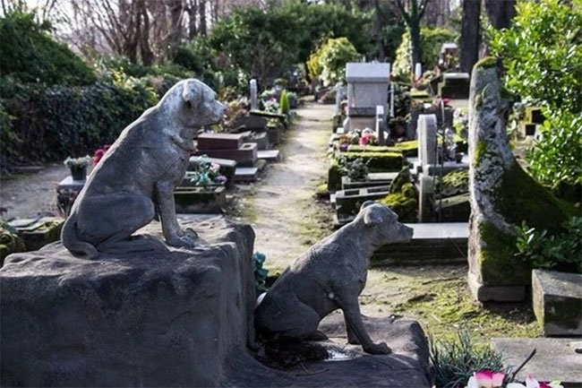 Nơi có nghĩa trang cho động vật đầu tiên trên thế giới