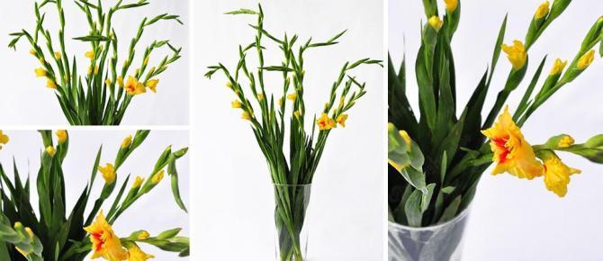 Cách cắm hoa lay ơn được tươi lâu ngày tết