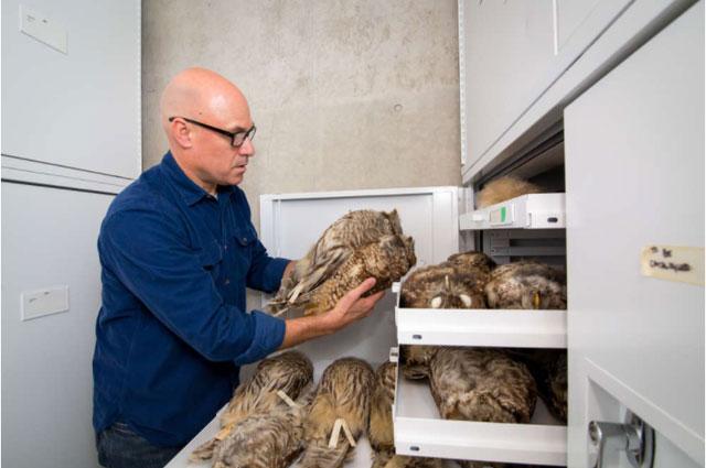 Nghiên cứu đồng tác giả Jack Dumbacher và bộ sưu tập thứ 5 tại Học viện Khoa học California.