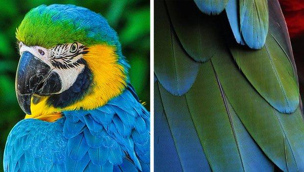 Các loài chim mang sắc xanh thực chất không có sắc tố nào như vậy trong người.