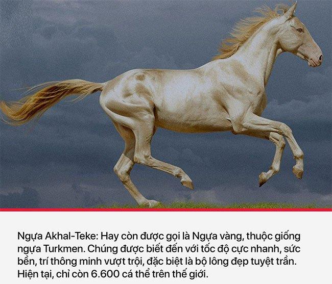 Người Akhal Teke