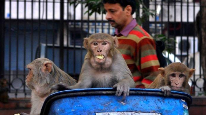 Người dân thành phố và động vật sống cùng nhau.