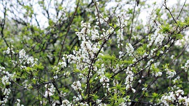 Trong ngày Lập Xuân đầu tiên nên dậy sớm để hít thở không khí trong lành
