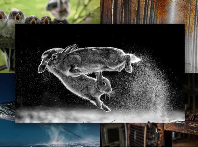 Cuộc chiến của thỏ đạt giải cao nhất tại Cuộc thi nhiếp ảnh thế giới - 1