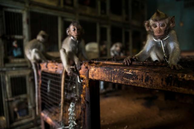 Cuộc chiến của thỏ đạt giải cao nhất tại Cuộc thi nhiếp ảnh thế giới - 12
