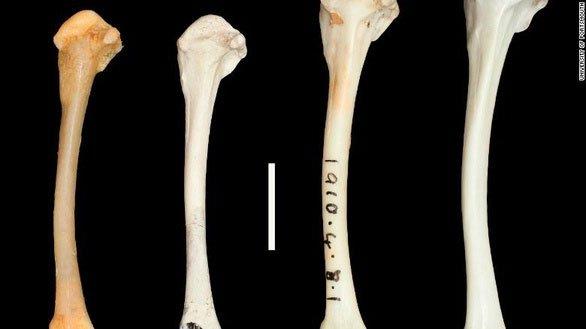 Các mẫu hóa thạch chứng minh hai loài đã tiến hóa tương đồng nhau.