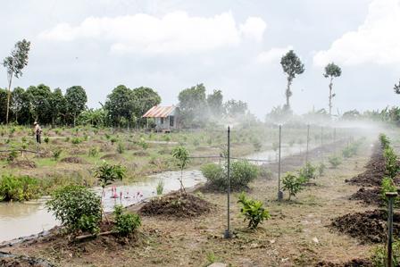 Hệ thống tưới phun nước tự động trên vườn cây ăn trái tại xã Xuân Thắng, huyện Thới Lai, TP Cần Thơ | Ảnh: Cantho Online