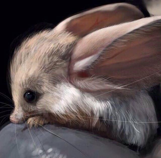 Loài động vật này có nguồn gốc từ các sa mạc phía nam Mông Cổ và tây bắc Trung Quốc.