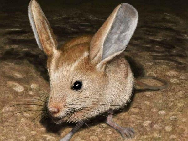 Động vật có vú trong họ Dipodidae