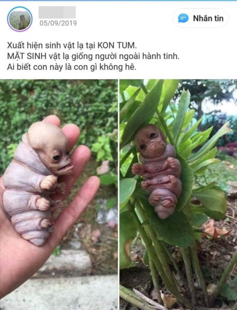 Chân tướng chuyện sinh vật lạ giống người xuất hiện tại Kon Tum