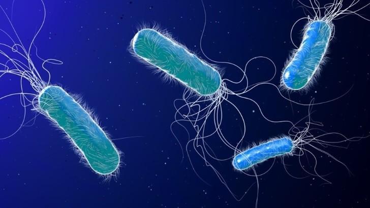 Sự phát triển kháng sinh mới không theo kịp tốc độ lây lan của vi khuẩn kháng kháng sinh - Ảnh: Shutterstock