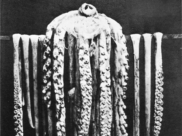Năm 1857, nhà sinh vật người Đan Mạch Japetus Steenstrup công bố nghiên cứu về răng mực khổng lồ, khẳng định chúng có thật