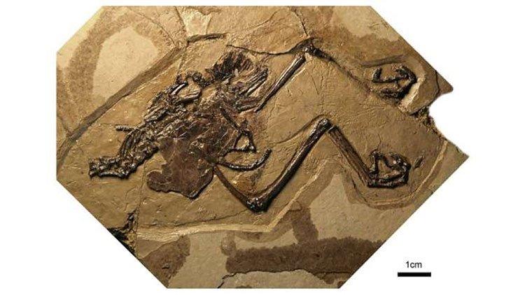 Các nhà khoa học phát hiện ra con chim hóa thạch đầu tiên với quả trứng còn nguyên vẹn.
