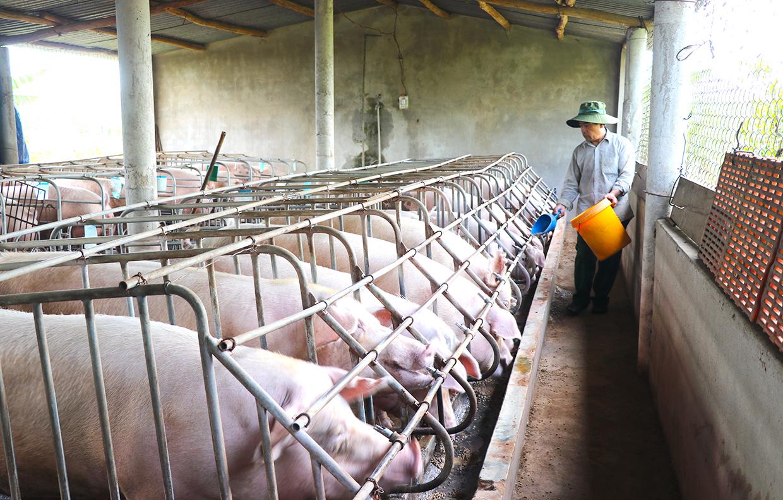 Một trang trại nuôi lợn ở Gia Lai. Ảnh: Ngọc Minh/baogialai