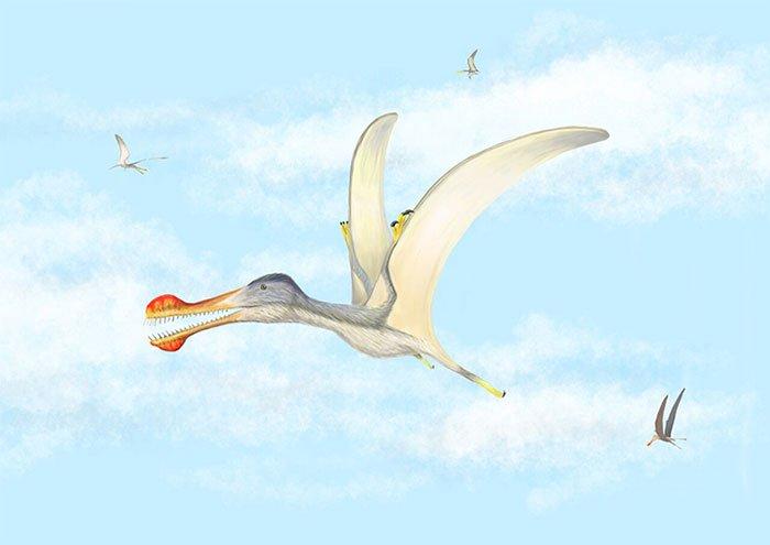 Đồ họa mô phỏng một loài thằn lằn bay có răng.