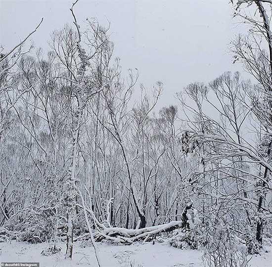 Tuyết rơi tháng 8 lần đầu tiên trong 15 năm phủ kín những hàng cây.