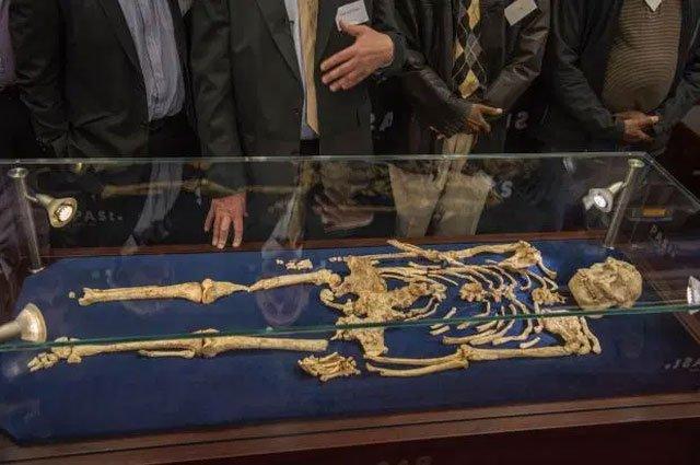 Các nhà khoa học đã chụp CT một bộ xương gần như đầy đủ của người vượn Phương Nam
