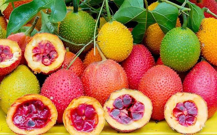 Gấc được xem là loại thực phẩm tốt cho những người thừa cholesterol trong máu.
