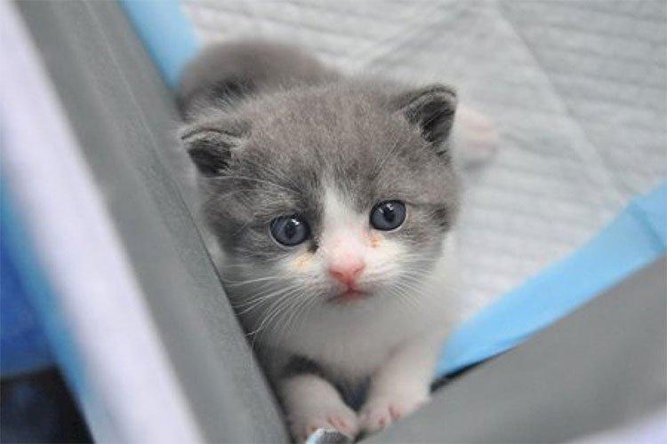 Garlic - chú mèo nhân bản vô tính đầu tiên của Trung Quốc.