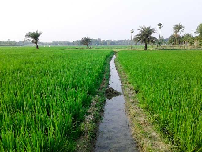 CO2 khiến cây lúa khỏe khoắn hơn, nhưng không có nghĩa chúng giàu dinh dưỡng hơn.