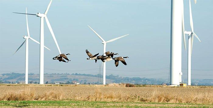 Những cánh quạt sơn đen tại trang trại điện gió ở Smola, Nauy