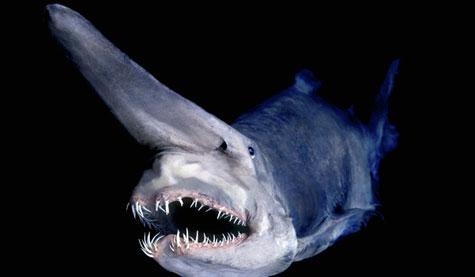 Cá mập yêu tinh