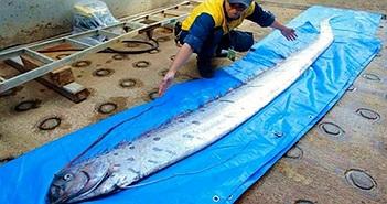 """Xác cá """"rồng biển"""" khiến người dân Nhật Bản lo lắng"""