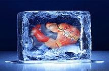 Vì sao chưa thể đóng băng nội tạng để lưu trữ như trứng và tinh trùng?