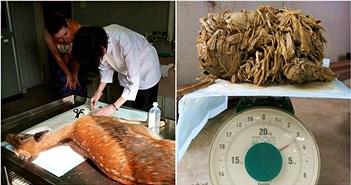 Mổ bụng con nai nặng 30 kg, phát hiện điều ám ảnh