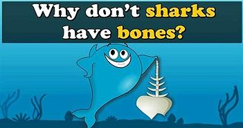 Lý do cá mập không có xương