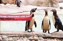 Hoan nghênh chim cánh cụt diễu hành tự hào đồng tính
