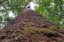 Sứ giả thời tiền sử duy nhất trên thế giới trong rừng Bidoup
