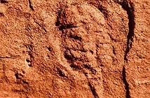 Tìm thấy hóa thạch động vật chân khớp 460 triệu năm tuổi