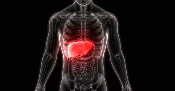Phát hiện tế bào mới có thể tái tạo gan