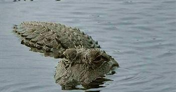 Siêu bão Harvey: Lo ngại hàng trăm con cá sấu sổng chuồng