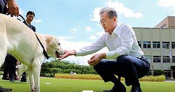 Chú chó do ông Kim Jong Un tặng cho Hàn Quốc đẻ 6 con