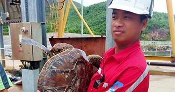 Thả đồi mồi quý hiếm nặng hơn 10kg về lại biển Hà Tĩnh