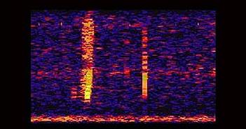 Âm thanh bí ẩn dưới đại dương