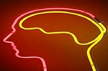 Não người và mạng internet giờ đây đã có thể kết nối với nhau!