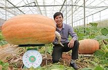 Quả bí ngô to nhất Việt Nam nặng hơn 120 kg