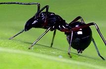 Kì lạ loài nhện nuôi con bằng… sữa