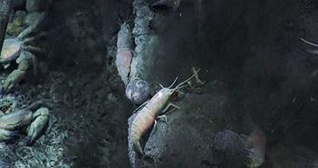 Có gì ở nơi sâu nhất Trái đất?