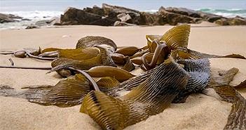 """Australia nóng kỷ lục, biển thành """"nồi lẩu"""" nấu chín nhiều sinh vật"""
