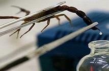 Nọc độc bọ cạp tử thần: Chất lỏng đắt nhất hành tinh!