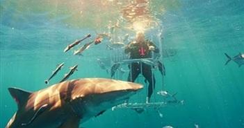 Lặn xuống biển 'đập hộp' Galaxy S8 cùng cá mập