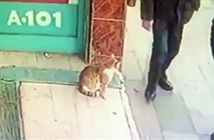 Kỳ quặc con mèo chỉ tấn công đàn ông, tha cho phụ nữ