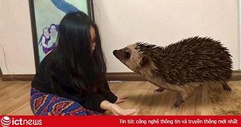 Chụp ảnh động vật hoang dã 3D ngay... trong nhà