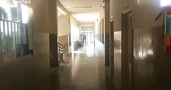 Video: Báo đốm xông vào trường học tấn công nhân viên an ninh