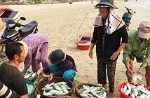 Công bố 3 số hotline hỗ trợ ngư dân miền Trung