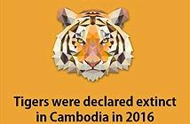 12 sự thật thú vị về loài hổ khiến bạn kinh ngạc
